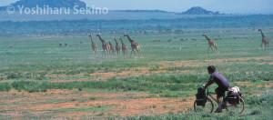 グレートジャーニー(1993〜2002・アフリカ)から