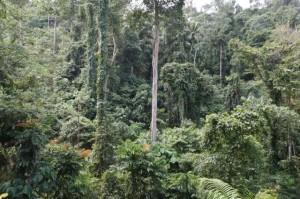 インドネシア報告(12) 写真レポート・丸木舟の巨木 2008/12/29