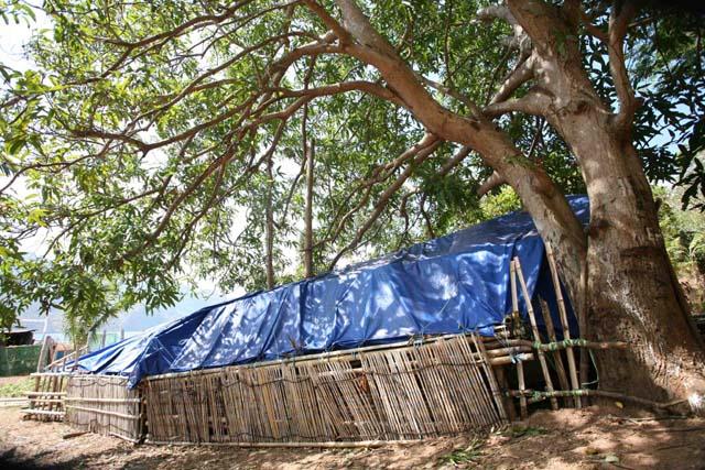 1.マンゴの木の下にビニールシートを張って作った艇庫